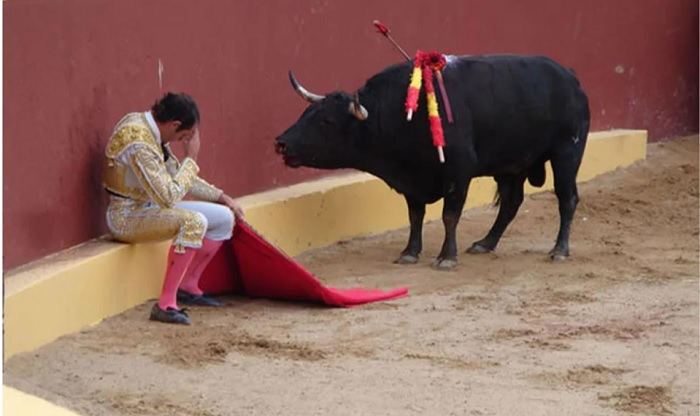 «Сдавшийся» быку матадор