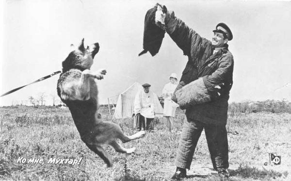 На съемках фильма «Ко мне, Мухтар!» собаки по настоящему нападали на «злоумышленников»