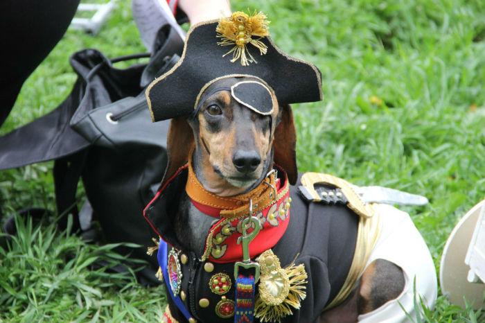 Фантазия хозяев маленьких собачек безгранична, и на параде такс это заметно особенно