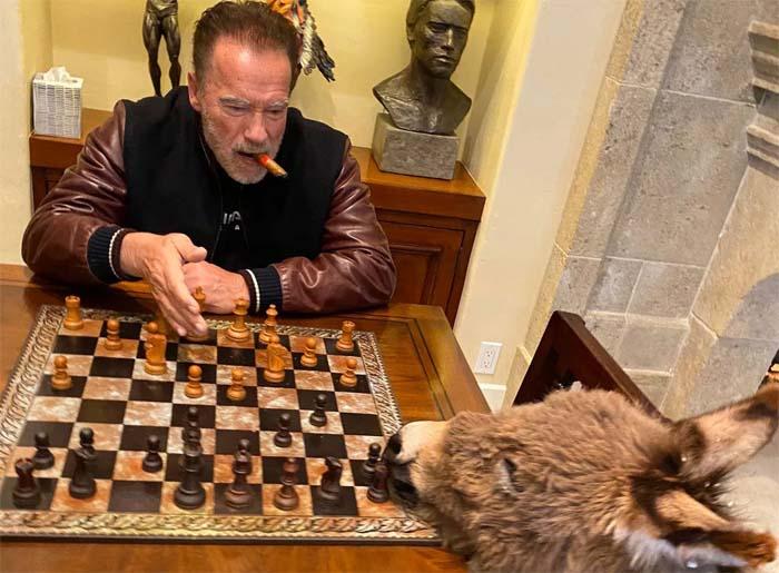 Арнольд Шварценеггер на карантине учит своего домашнего ослика играть в шахматы