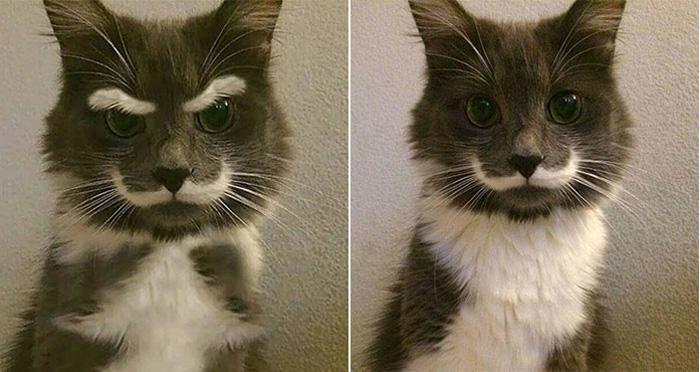Эта фотография усатого сердитого кота получила в сети огромную популярность