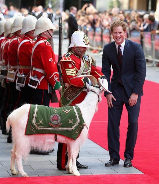 Английская королевская семья лично принимает участи в судьбе необычного бойца своей армии – козла Уильяма Виндзора