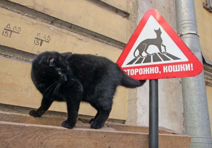 Для защиты котов от транспорта устанавливают специальные таблички