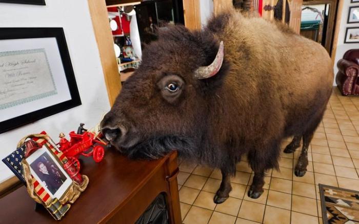 Огромное животное в доме, конечно, создает проблемы, но супруги Бриджес очень любят своего питомца
