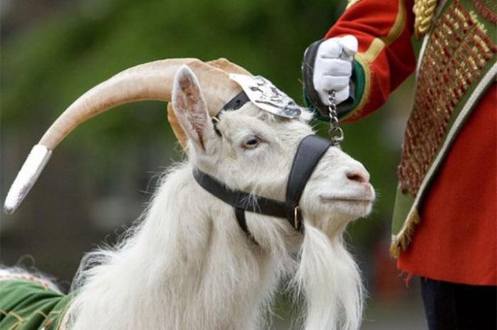 Серебряное украшение на голове младшего капрала – подарок королевы и часть обмундирования
