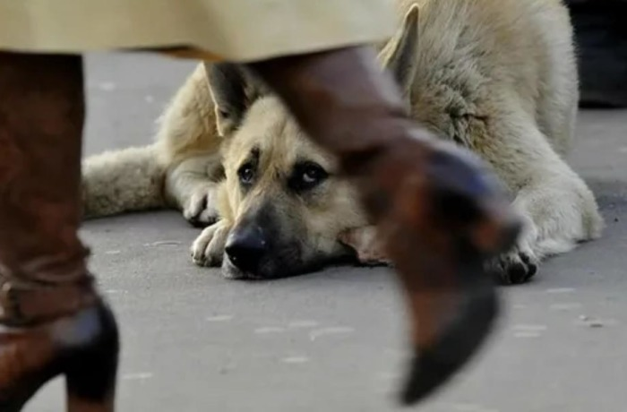 Street dogs can be a real problem