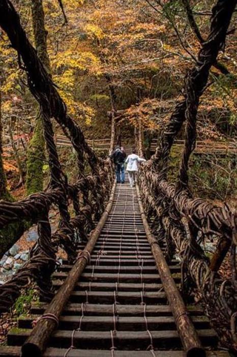 Мост из лозы через реку Ия объявлен важным культурным достоянием Японии