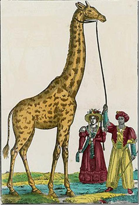 Раскрашенная гравюра XIX века «Жираф»