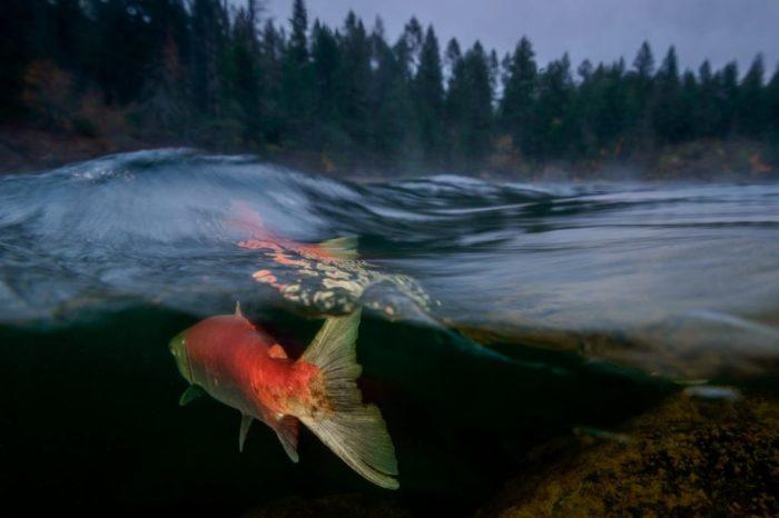 Эйко Джонс «Туманное утро на реке Адамс», 5-е место «Ocean Art 2018», категория «Холодная вода»
