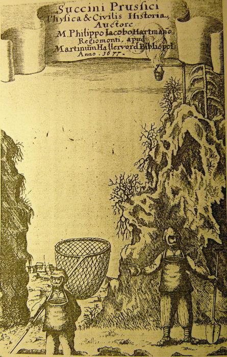 Европейская гравюра 1677 года изображает ловцов янтаря с сачками