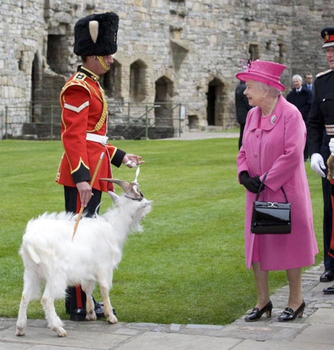 Королева Елизавета знакомится с новым Уильямом Виндзором