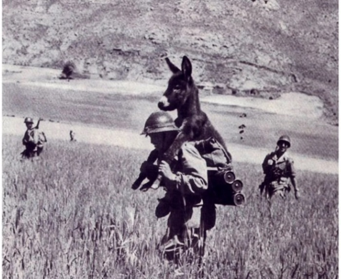 Фото солдата с осликом на плечах