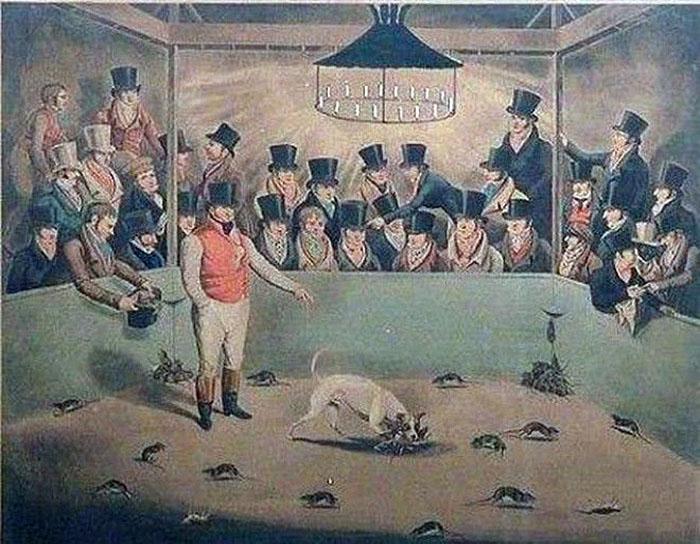 Травля крыс – азартное развлечение: ставки делались на то, как быстро собака справится с грызунами