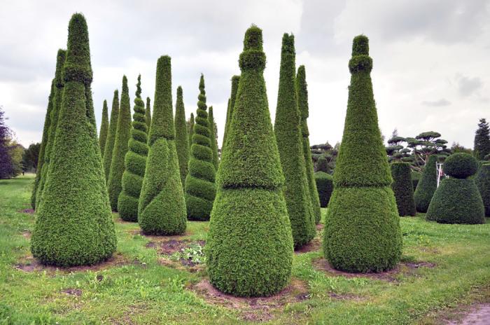 Топиарная стрижка деревьев и кустарников