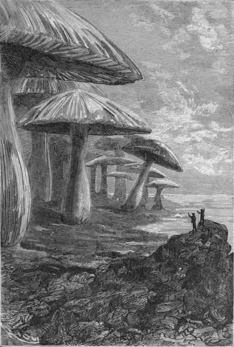 """Иллюстрация к """"Путешествию к центру Земли"""". Грибы в подземном царстве Жюля Верна удались"""