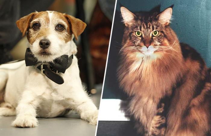 Кошек или собак больше любят снимать кинематографисты и как готовят четвероногих актёров к выходу в кадр