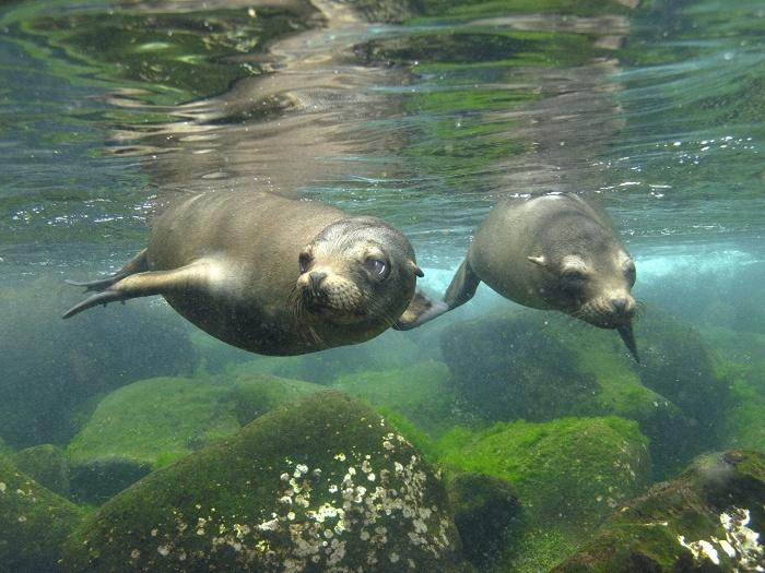 Эти создания способны заплыть туда, куда человеку не добраться. / Фото: www.1zoom.me