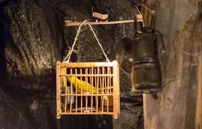 В шахте использовали канареек. / Фото: www.magalix.com