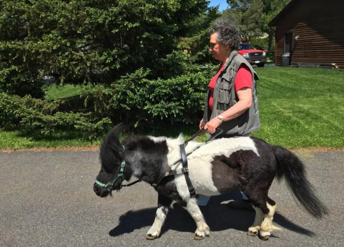 Мини-лошадь неплохо справляется с обязанностями поводыря. / Фото: www.washingtonpost.com