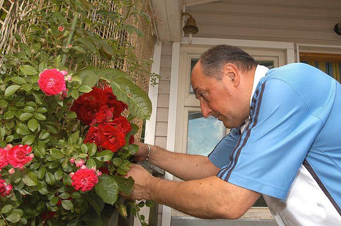 Борис Клюев мечтает вырастить чёрную розу. / Фото: www.aif.ru