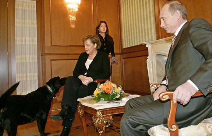 Лабрадор Кони знакомится с Ангелой Меркель. / Фото: www.nv.ua