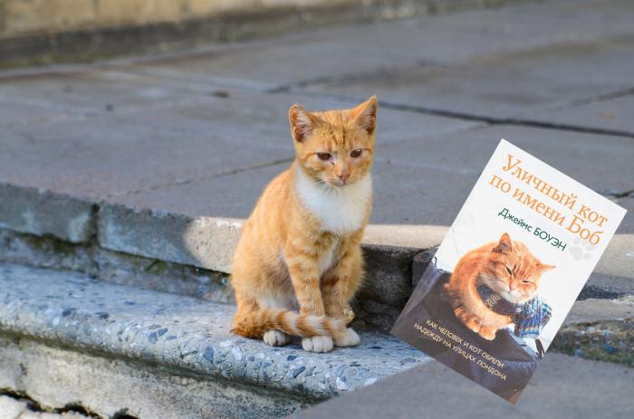 «Уличный кот по имени Боб», Джеймс Боуэн.