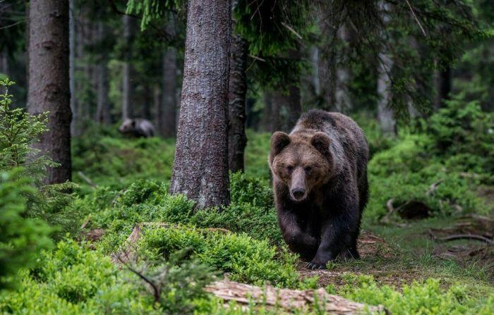Медведя считали хозяином леса. / Фото: www.pinimg.com