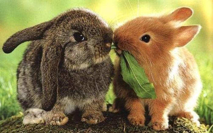 Зайцев и кроликов есть было не принято. / Фото: www.oir.mobi