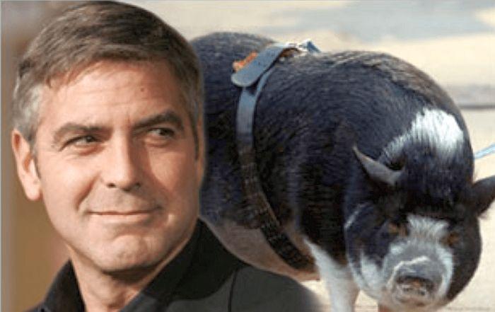Джордж Клуни и его Макс. / Фото: www.bibaleze.si