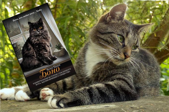 «Боно. Удивительная история спасенного кота, вдохновившего общество», Хелен Браун.