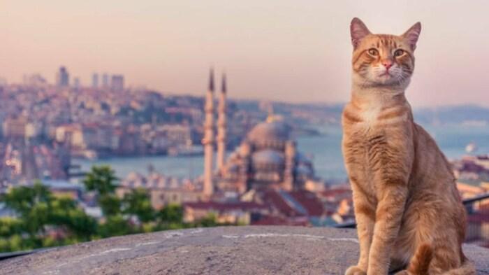«Город кошек», 2016 год