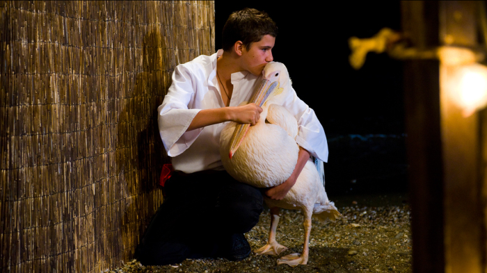 «Пеликан» (2011 год)