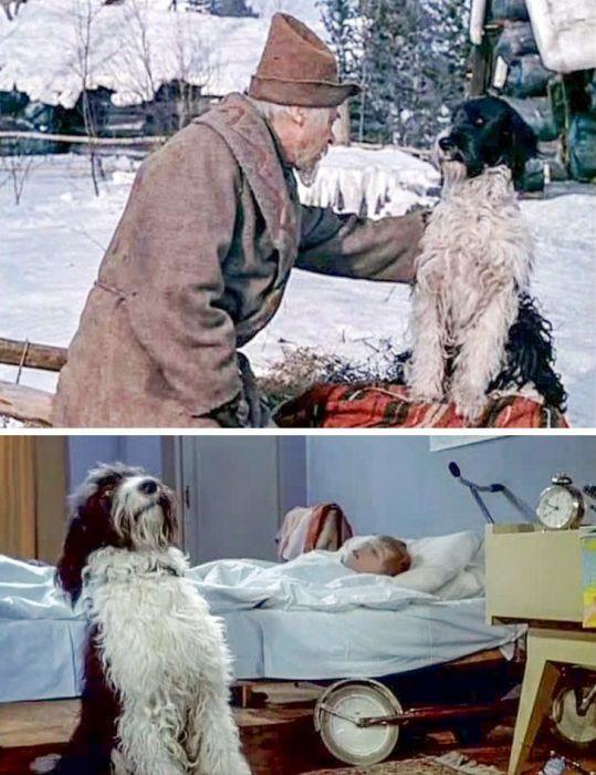 Пес Дружок стал любимцем советских зрителей