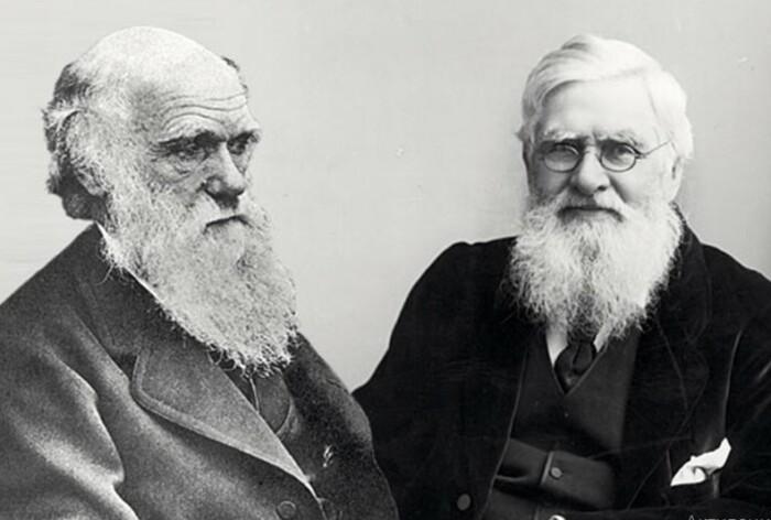 Дарвина и Уоллиса было бы правильным называть основоположниками теории.