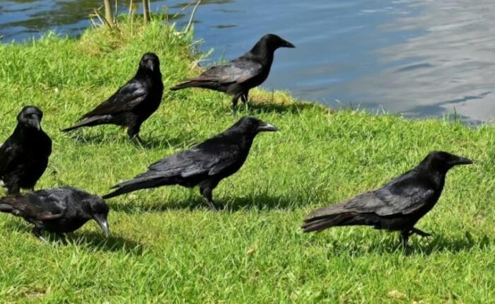 С этими птицами связана масса легенд и примет.