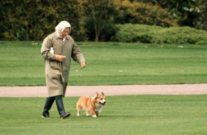 Вот так выглядят королевы, когда выгуливают своих питомцев.