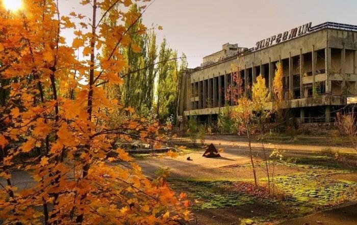 Сейчас в Припяти властвует природа.