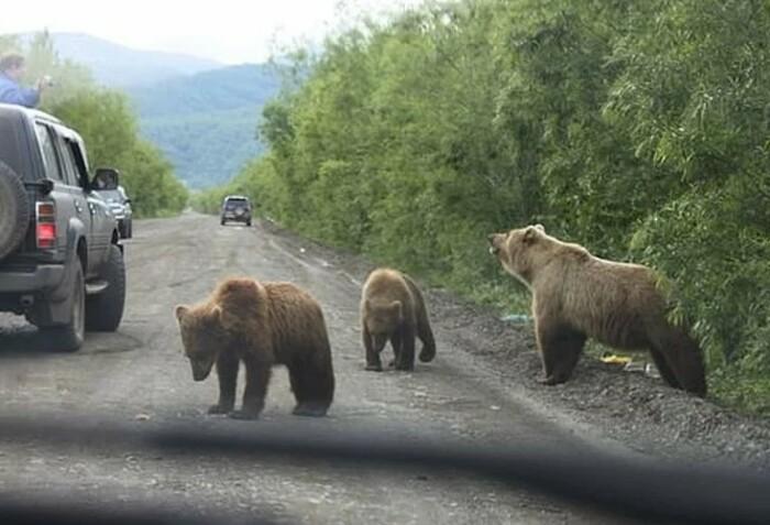 Заставить медведя выйти к людям может только голод.