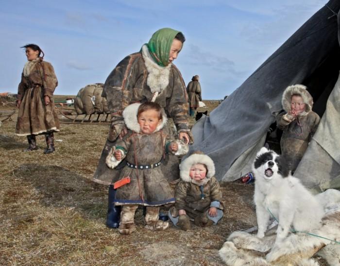 Тундровые энцы более известные как хантайские самоеды / Фото: therussiantimes.com