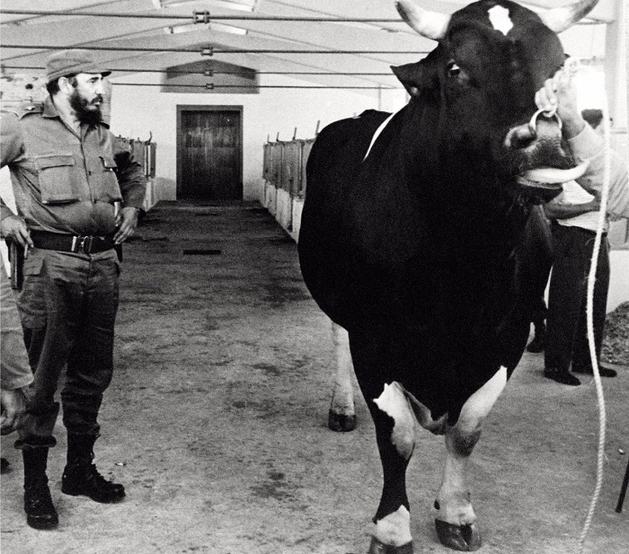 Фидель Кастро на селекционной ферме в окрестностях Гаваны / Источник: spiegel.de