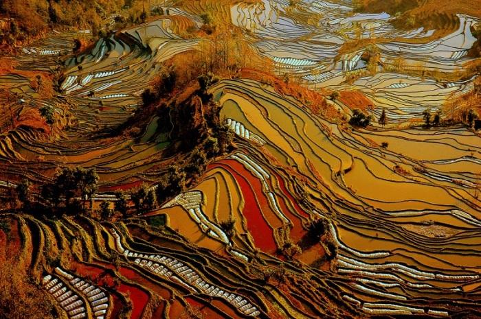 Багряные тона в окрасе рисовых террас в првинции Юньнань / Фото: udivitelno.com