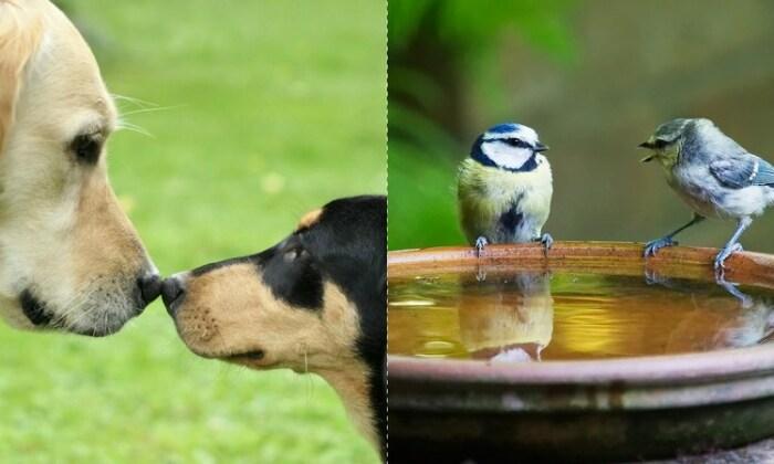 Животные, рыбы и птицы общаются при помощи звуков, запахов и телодвижений
