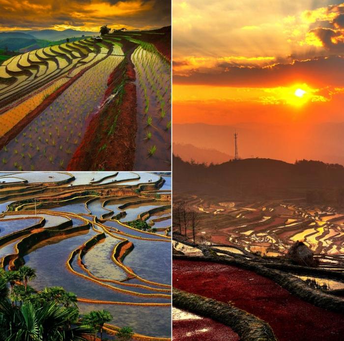 Рисовые террасы в Китае по-настоящему завораживающее зрелище