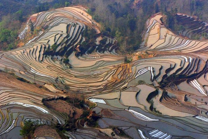 Рисовые поля в Китае / Фото: pravlife.org