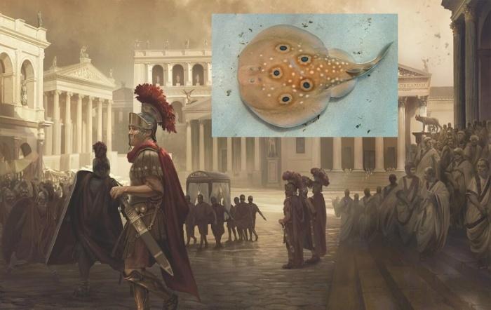 Впервые разряд электрического ската в медицинских целях использовали в Древнем Риме.