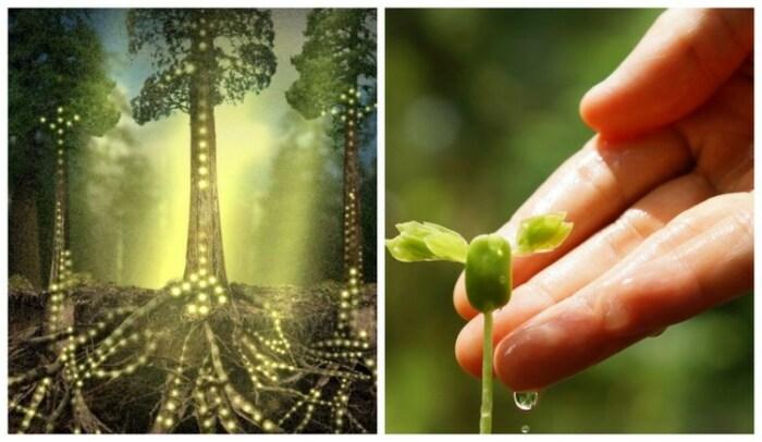 Растения и деревья общаются с помощью своего физического тела