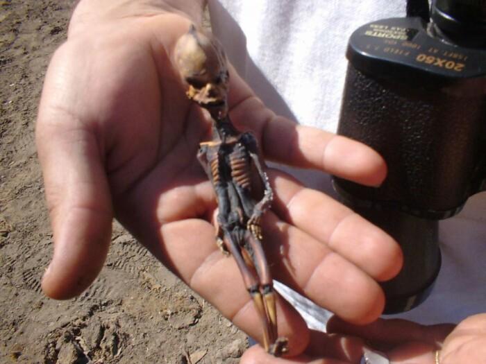 Гуманоид Атакама. / Фото: mendozapost.com