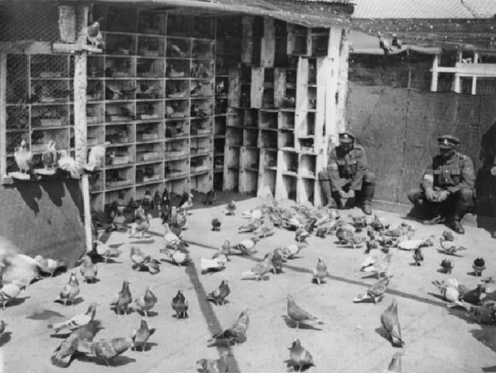 Британские солдаты кормят голубей в вольере / Источник: krylatiesportsmeni.mybb.ru