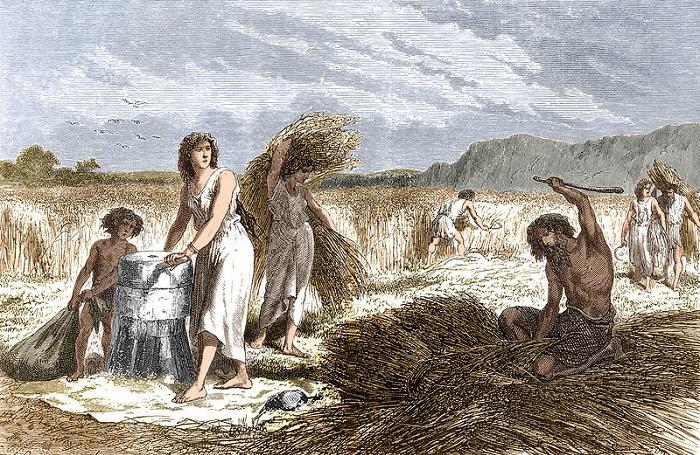 Сельское хозяйство в эпоху Железного века. / Фото: sciencephoto.com