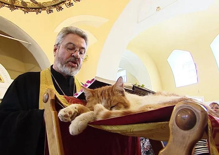 Кошки – единственные животные, которым разрешено находиться в православном храме / Фото: joyreactor.cc